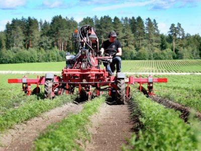 Porkkana huutaa vettä – Paavo Pulkkinen Mikkelin Haukivuorelta kertoo, millainen on kuivan kesän porkkana