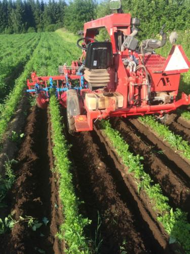 Harausta / Maintaining the rows