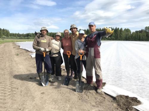 Harsoammattilaiset Kalliolan luomulta / Row covering team from Kalliolan luomu