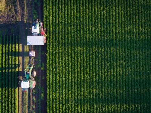 Ilmakuva sadonkorjuusta / Aerial view of harvest