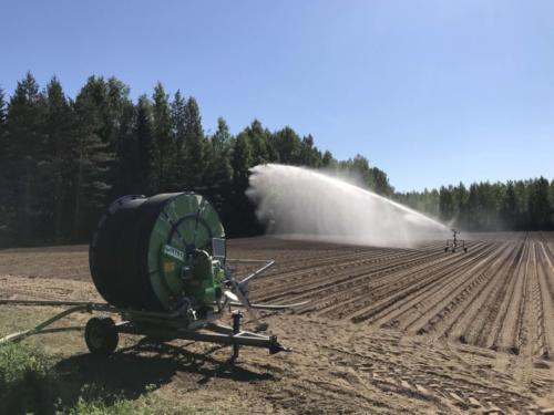 Sadetusta / Irrigation of carrot fields