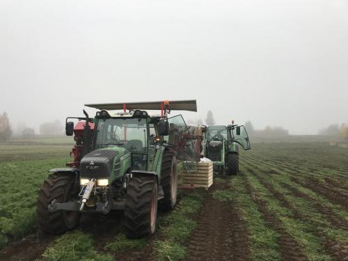 Nostoa Hovinsalossa, 2018 / Harvesting 2018
