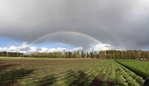 Nostopäivä Hovinsalossa 2018 / Harvesting day in Hovinsalo, 2018